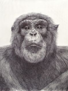 Amazing art-- created with a ballpoint pen! See more amazing works of art! | #drawing #ballpointpenart