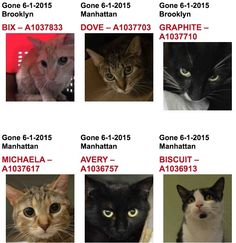 11 CATS KILLED BY ACC 06/01/15/////// REPIN IN MEMORY IF THESE CATS!!!!