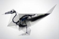 Takayuki Hori's Beautiful X-Ray Origami Animals Shine Light on 8 Endangered Species