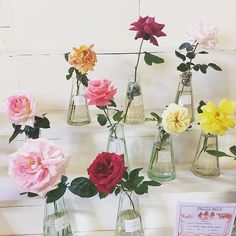 Love these roses that were on display at this years Oberon Show. Country Life, Country Style, Instagram Shop, Instagram Posts, Slow Living, Vintage Shops, Glass Vase, Roses, Display