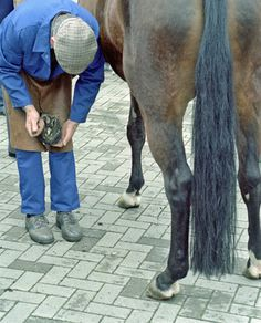 Natural Ways to Strengthen Horse Hooves