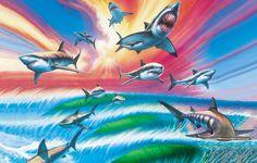32 mejores imágenes de maui and sons sharks  0d0784e49b0
