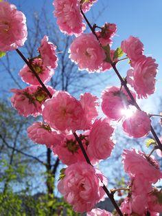 Tavasz/Spring