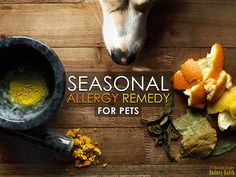 Is your dog itchy, sneezy and wheezy? There's a natural solution! Find out how you can squash seasonal allergies in dogs with nature's Benadryl . Seasonal Allergy Remedies, Seasonal Allergies, Itchy Dog, Dog Food Online, Coconut Oil For Dogs, Oils For Dogs, Healthy Pets, Pet Health, Dog Grooming