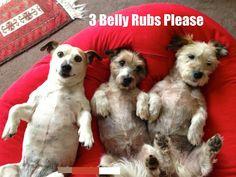 Belly rubs x 3