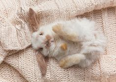 "sugarmepink: "" jesuisatoi: "" loveyourchaos: "" © kittynn "" Boy upon seeing this: ""Aww, that was a cute kitten!"" """