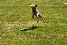 Seven proves that frisbee isn't just for the big dogs!
