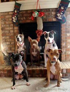 Christmas pits