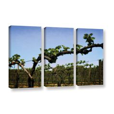 ArtWall Kevin Calkins ' Spring Vineyard 3 Piece ' Gallery-Wrapped Set