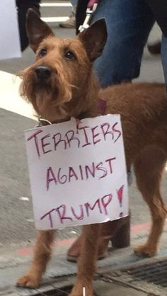 Found this little freedom fighter marching the streets of NYC http://ift.tt/2jktaML