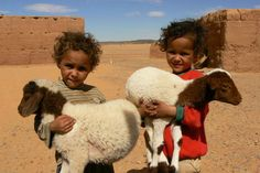 ... Morocco.......i think they are sheep not goats