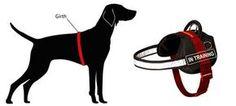 Doberman Nylon Dog Harness Nylon Reflective Dog Harness [H6P##1073 Nylon harness with reflective trim] - $39.90 : Dog harness , Dog collar ,...