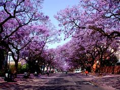 Jacaranda trees Pretoria, Travel Memories, Countries Of The World, Natural, South Africa, Sidewalk, Around The Worlds, Country Roads, Earth