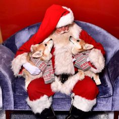 Santa likes cookies and milk  But his secret is he loves puppies any puppies