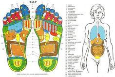 A láb reflexzónái