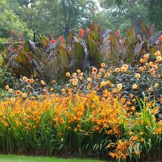 Set your garden border ablaze for weeks from midsummer to fall with 3 outstanding plants: Crocosmia, Dahlia and Canna. Flowers That Attract Hummingbirds, How To Attract Birds, Savill Garden, Summer Flowering Bulbs, Canna Lily, Crocosmia, Hummingbird Garden, Garden Shrubs, Fence Garden