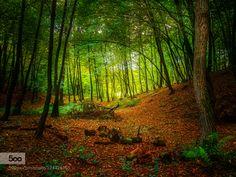 Forest XIII by nostrun #fadighanemmd
