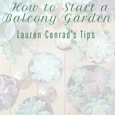 A few tips for starting a garden even if you don't have much in the way of space.