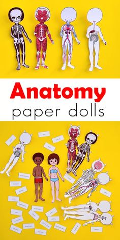 Study the human body anatomy with kids by making a set of printable anatomy paper dolls, with each layer showcasing a different body system! human body system Anatomy Printable Paper Doll for Kids Teaching Science, Science For Kids, Teaching Kids, Kids Learning, Activities For Kids, Science Ideas, Science Activities, Math Games, Outdoor Activities