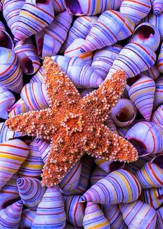 Purple Sea Shells and Starfish