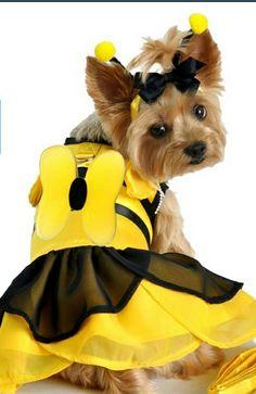 Bumblebee Costume - Yorkie
