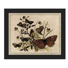 "Click Wall Art '7 Butterfly and Clovers Drawing Paper' Framed Graphic Art Size: 8"" H x 10"" W x 1"" D, Frame Color: Black"