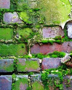 texture- because it shows the brick growing moss Foto Macro, Peeling Paint, Texture Art, Green Texture, Natural Texture, Shade Garden, Wabi Sabi, Shades Of Green, Textures Patterns