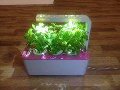 Grow Your Herbs On Your Kitchen Counter With Smart Herb Garden - https://technnerd.com/grow-your-herbs-on-your-kitchen-counter-with-smart-herb-garden/?utm_source=PN&utm_medium=Tech+Nerd+Pinterest&utm_campaign=Social