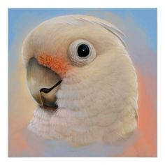 Goffin Tanimbar Corella Cockatoo poster. Available also in different poster paper type. #goffincockatoo #cockatoo #bird #tanimbarcockatoo #parrot #goffin #tanimbarCorella #painting #petportrait #drawing #realism #realistic #avian #Cacatuagoffiniana #zazzle #petopet #emmil #thomas #deviantart #merchandise #sale #birds #poster #posters