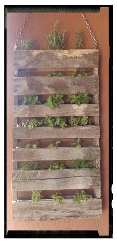 Hanging herb garden made from an old pallet - Modern Herb Garden Pallet, Herb Garden Design, Pallets Garden, Pallet Gardening, Hanging Herb Gardens, Hanging Herbs, Easy Herbs To Grow, Growing Herbs, Herb Wall