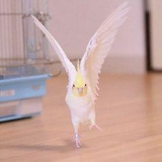 鳥フォトコンテスト「オザ兵長」さん