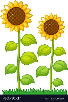 garden drawing Two sunflowers in the garden Royalty Free Vector Image Sunflower Clipart, Sunflower Images, Free Vector Images, Vector Art, Flower Garden Drawing, Boarders And Frames, Tree Clipart, Flower Outline, Garden Illustration