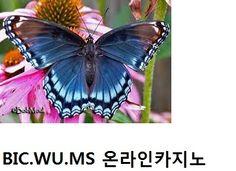 #온라인카지노 #온라인카지노 ↔ ( http://bic.wu.ms) 윤형주 온라인카지노 조현아