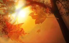 Google Afbeeldingen resultaat voor http://www.hdwallpapers.in/walls/orange_autumn-wide.jpg