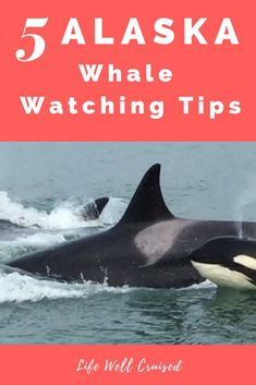 A cruise to Alaska wouldn't be complete without whale watching. Learn what you need to know and all the whale watching tips so that you can have the best and most memorable excursion when going out and watching whales in Alaska on a cruise. Cruise Excursions, Cruise Destinations, Cruise Travel, Cruise Vacation, Vacation Ideas, Vacations, Honeymoon Cruise, Cruise Packing, Cruise Port