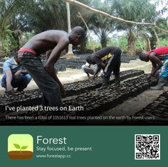 Forest App, Stay Focused, Trees To Plant, Plants, Movie Posters, Tree Planting, Earth, Tree Structure, World