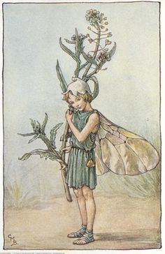 Illustration for the Shepherd's Purse Fairy from Flower Fairies of the Winter. A girl fairy