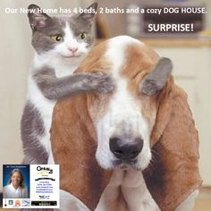 Linda Ring, Century 21 Award San Diego, Smarter. Bolder. Faster. Over 33 Years of Real Estate Service you can trust. 12,000+ Properties For Sale in San Diego County. Zero Down VA Loan. We Help Our Heroes Buy Homes! ½% FHA Loans Available. We have homes, condos, townhomes, units, mobile homes, and more. Looking to buy a San Diego foreclosure, short sale, or traditional sale, we have them all. www.Help619.com (619) 251-5202 #NoPlaceLikeHome