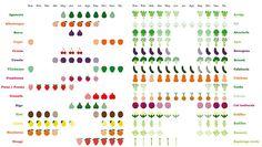 ¿Has visto fresas en la frutería y has caído en la tentación, pese al precio desorbitado? ¿Zumo de naranja en pleno agosto? ¿Alcachofas y guisantes naturales ahora? Definitivamente necesitas imprimir y colocar en algún lugar bien visible de tu cocina -a ser posible cerca de la lista de la compra- este póster editado por el ...
