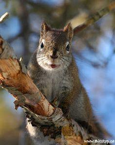 Bitstop: Cute Squirrels