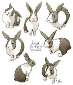 rabbit drawing - Google Search