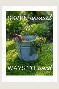 When it comes to weeding gardens, there are no magic solutions. But there are new twists on old ideas. Read on learn more. Weed Killer, Weed Control, Weeding, Twists, Organization Hacks, Mistress, Garden Plants, Gardening Tips, Cleaning Hacks