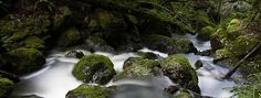 Hike: Cataract Falls  at Cataract Falls (near Mt Tam State Park), Bolinas Fairfax Rd., Fairfax, CA 94978