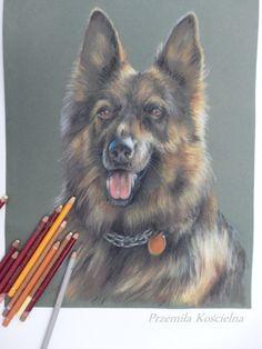 German shepherd dog. Pastel drawing. Pet portraits by Canis Art Studio #dog #petportraits #canisartstudio