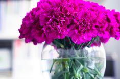 magenta flowers <3