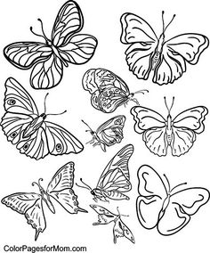 Erfly Coloring Page 35