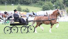 Photo Archive Royal Welsh Show Driving - Wagons - Mares 2011 : Rainhill Welsh Cobs