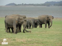 The Good and The Bad of Elephant Tourism in Sri Lanka | Bemused Backpacker