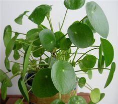 gardens plants and larger on pinterest. Black Bedroom Furniture Sets. Home Design Ideas