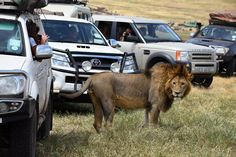 Serengeti National Park, National Parks, The Incredibles, Car, Automobile, Vehicles, Cars, Autos, State Parks